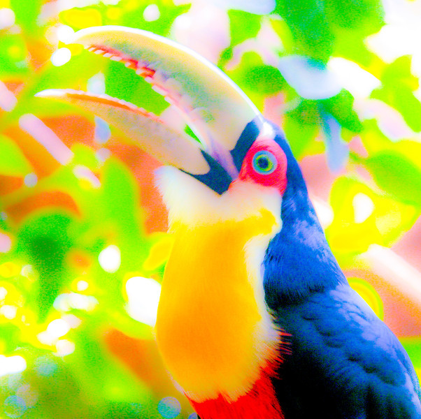 Pop Art Toucan