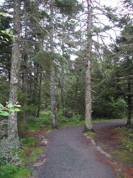 12 Trail II