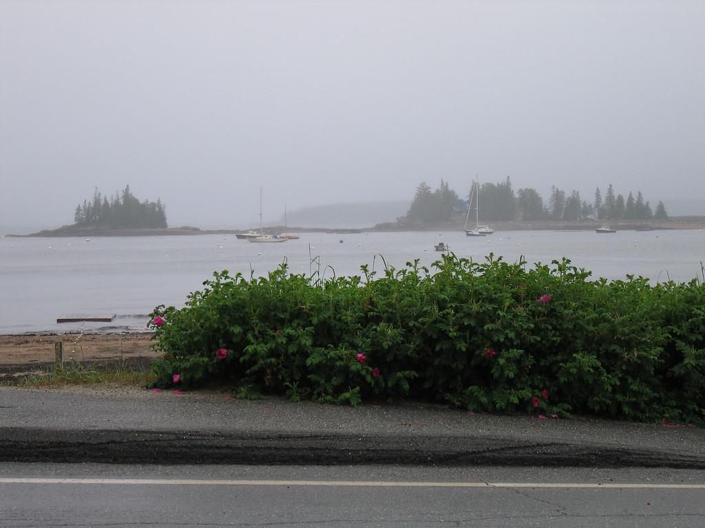 10 Harbor and Sidewalk with Flowering Bush