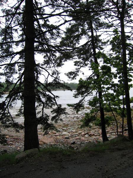 26 Trees and Beach Near Seal Harbor