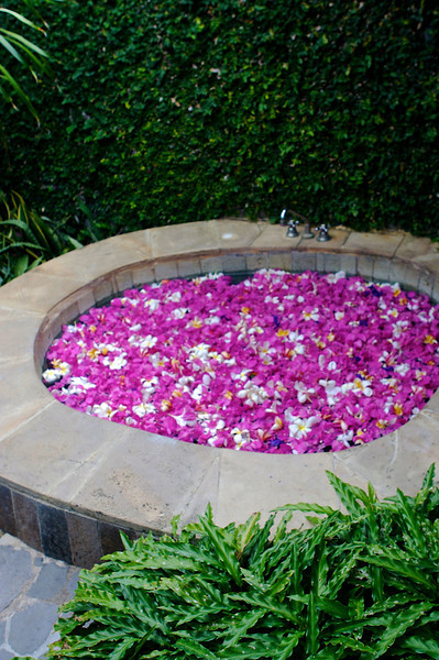 This hot tub is filled with frangiapani flowers.