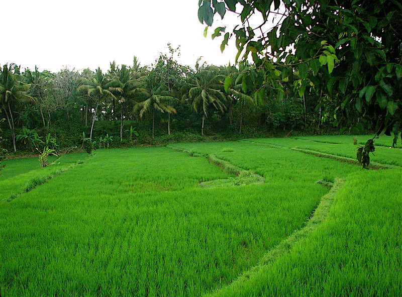 Rice paddies surround the hotel.