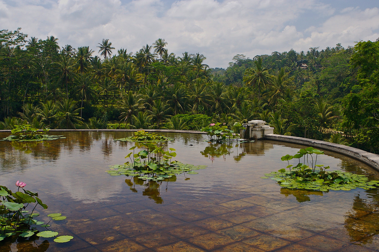 During our stay in Ubud, we'll be staying at the Four Seasons.  The Four Seasons in Ubud is one of the most unique hotels in the world. <br /> <br /> The top of the hotel is actually underneath a large lily pond.
