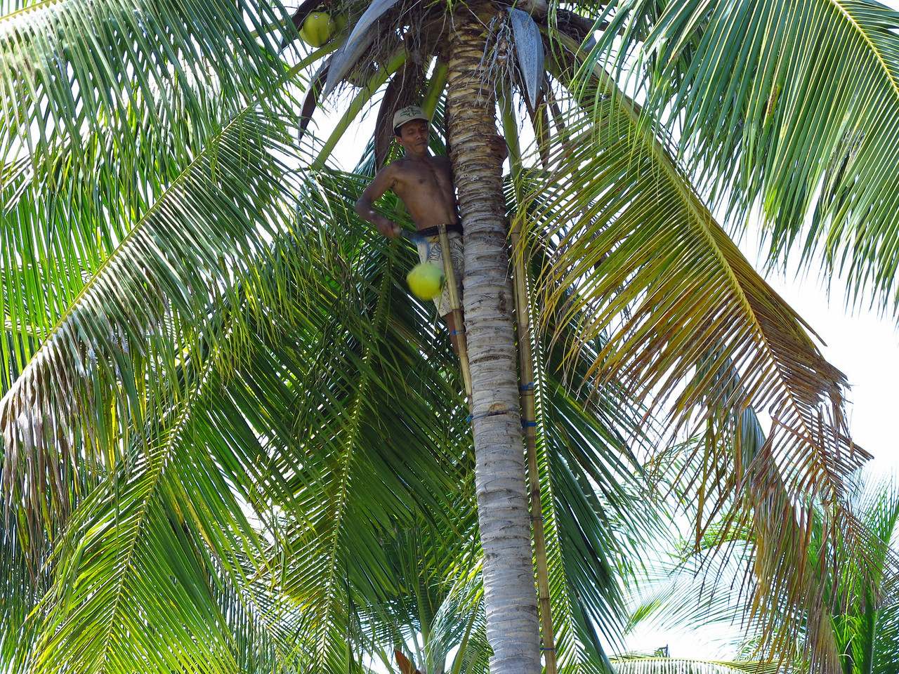 When you need a fresh coconut, someone is always around to get you one.