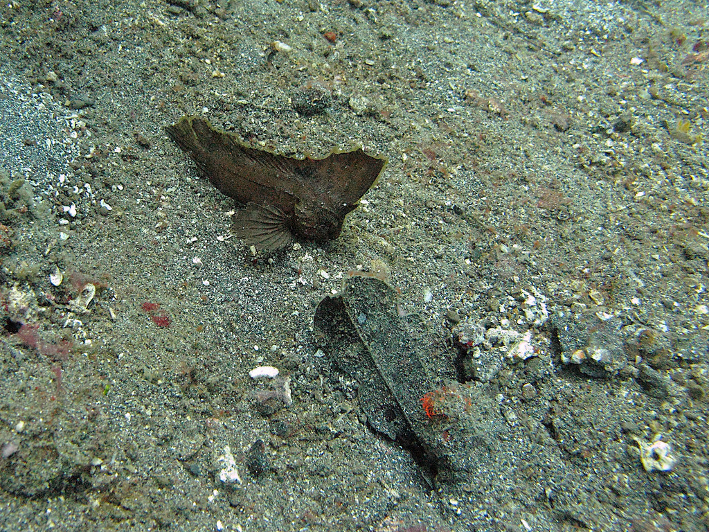 Some animals look like leaves on the bottom of the seabed.