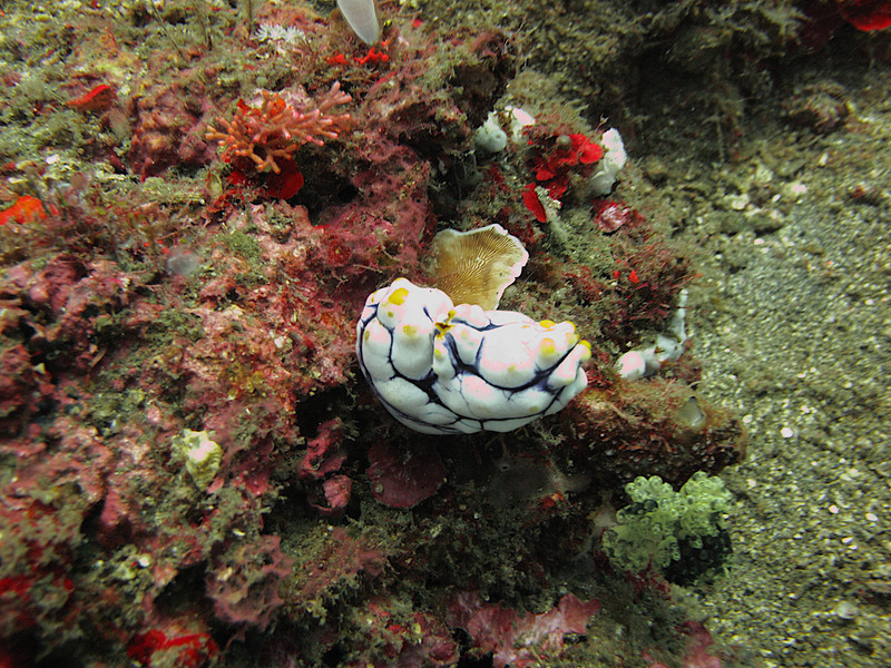 Sea Squirts are filter feeders.  They are known to contain 3 chemicals that have proven effective in fighting three types of cancer.  They also can correct genetic abnormalities over a series of generations.