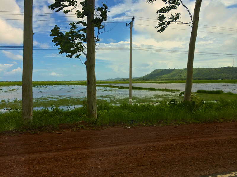 There are also rice fields as you get closer to the coast.
