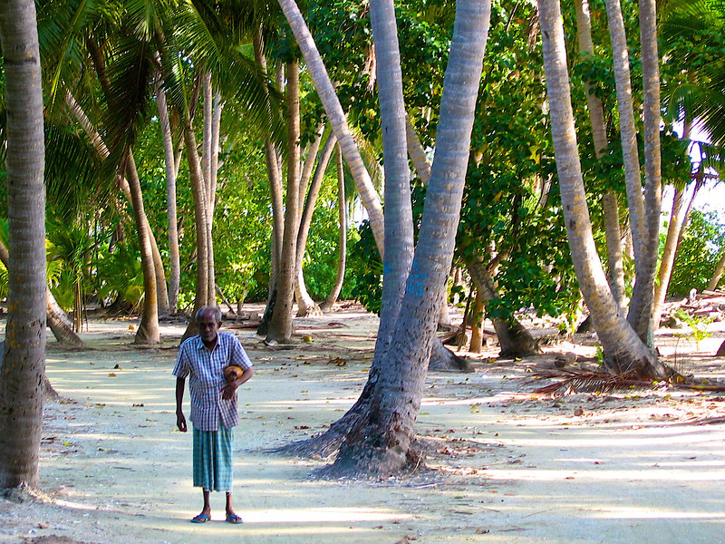 A resident gathering coconuts in the early morning.