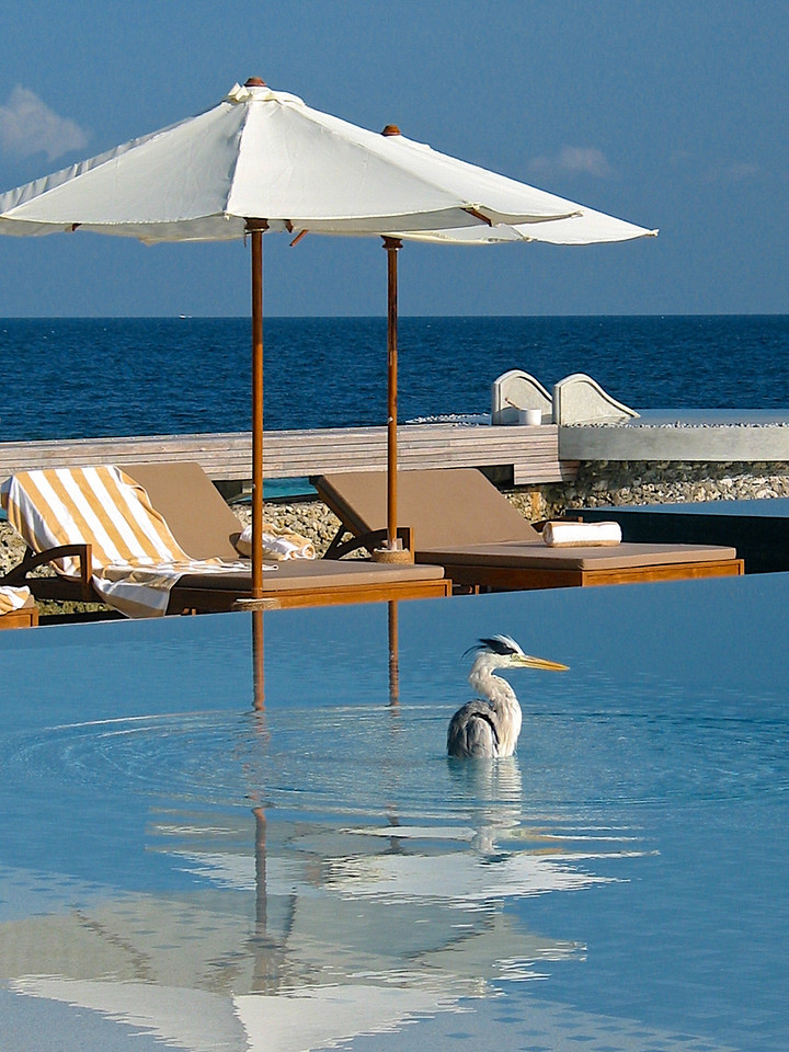 """Early in the morning, there are sometimes other """"guests"""" that use the pool."""