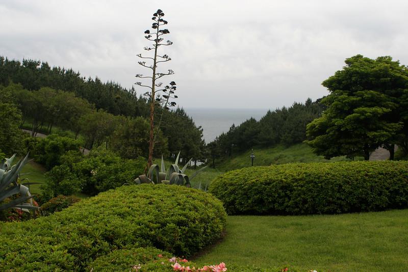 Seogwipo has a sub tropical climate since it's near the ocean.