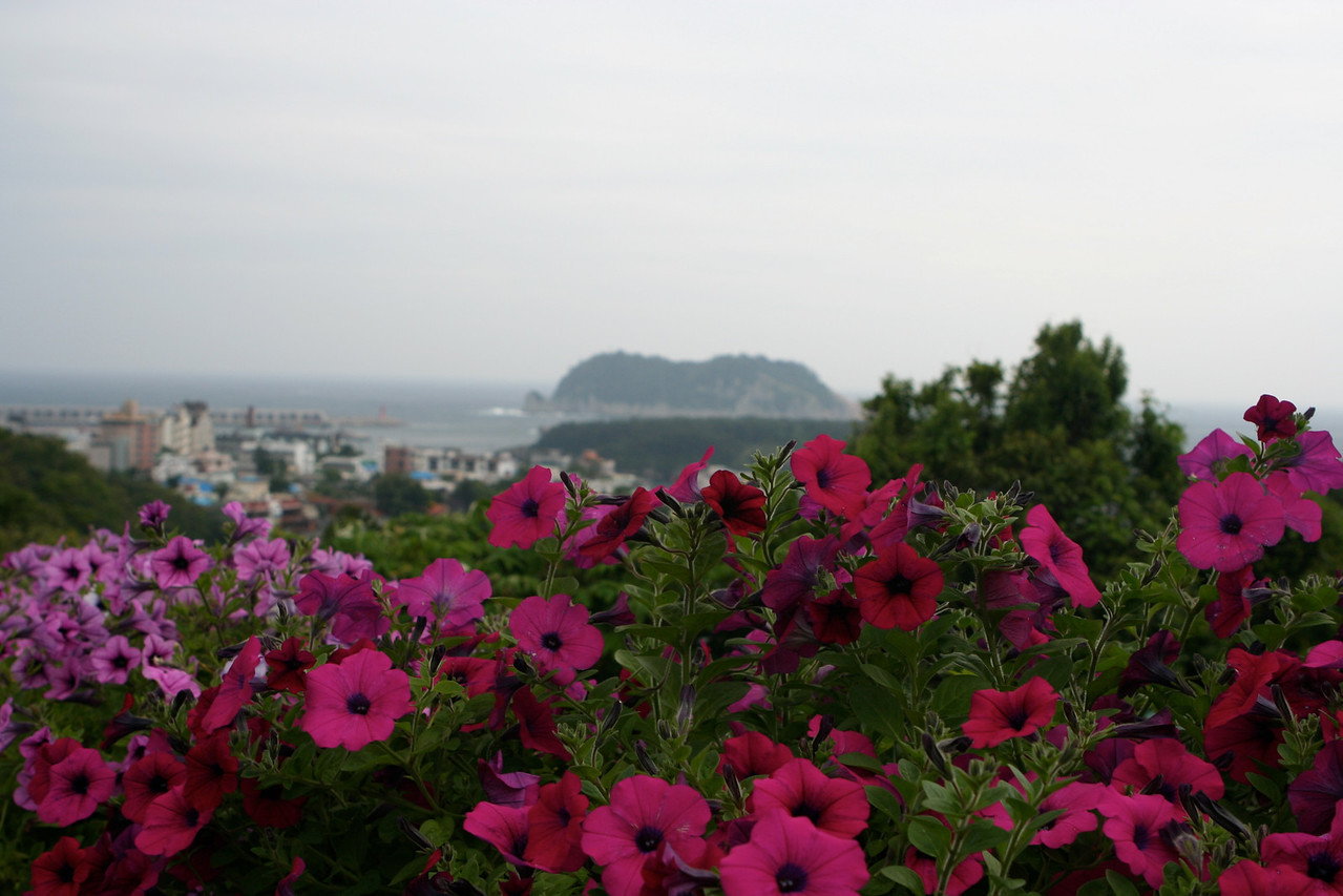 The Island of Jeju is 60 miles south of South Korea.  It lies at the juncture of the Yellow and East China seas.