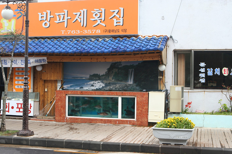 Fresh seafood markets are everywhere in Seogwipo when you're near the waterfront.