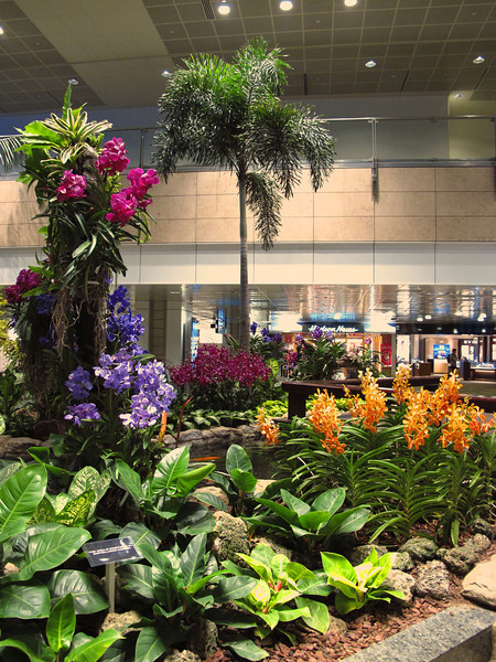 The orchid garden inside of the Singapore airport.