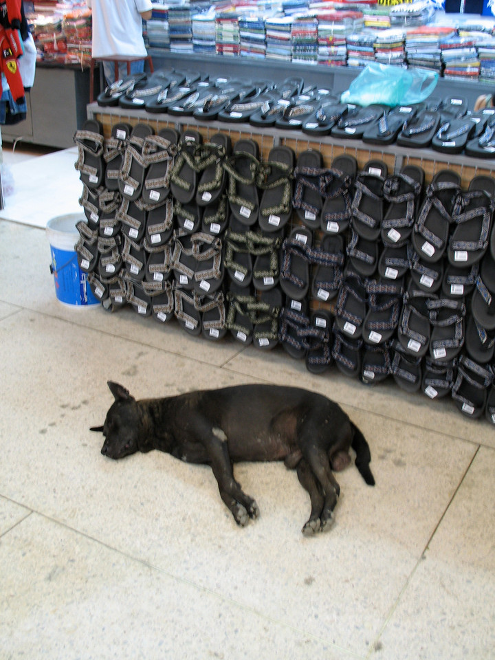 """After a couple of hours at the night market, we're all """"dog"""" tired."""