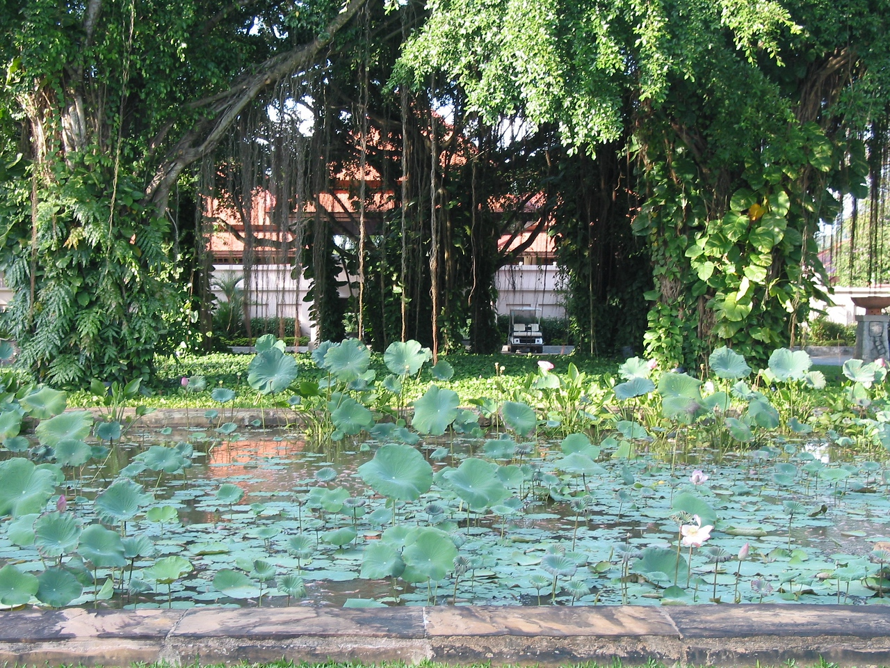 … a large lilly and lotus pond in front of the hotel.