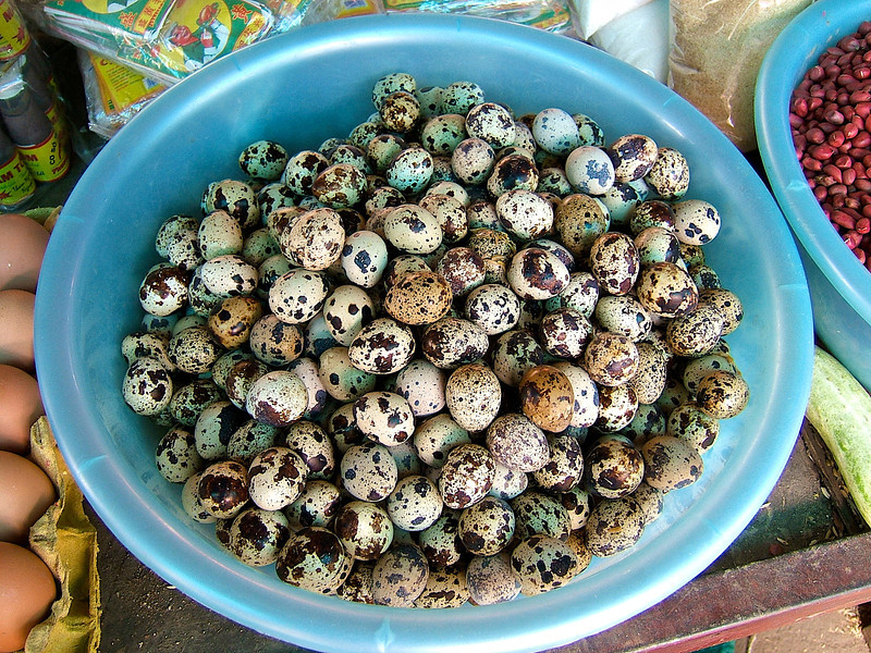 …bird eggs are also a popular delicacy.