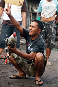 Cock-fighting