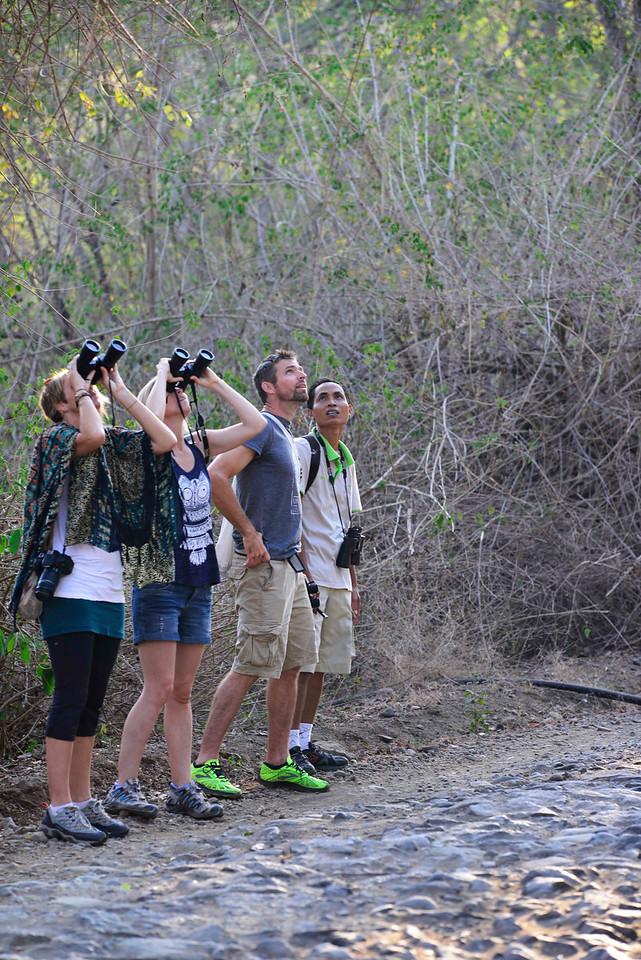 West Bali bird-watching
