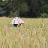 Person wearing conical hat in field, Siem Reap, Cambodia