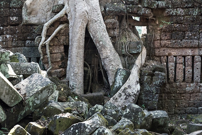 Spung tree and stones at Ta Prohm Temple, Angkor Archaeological Park, Krong Siem Reap, Siem Reap, Cambodia