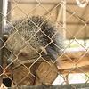 zoo park Cambodia