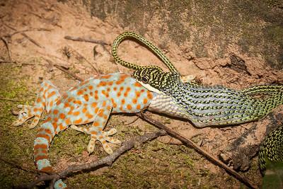 Cambodian biodiversity