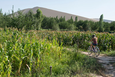 Tourist riding bicycle at farm, Dunhuang, Jiuquan, Gansu Province, China