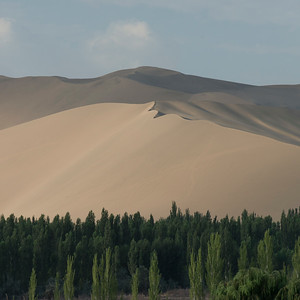 Trees with sand dunes at Mingsha Shan, Dunhuang, Jiuquan, Gansu Province, China