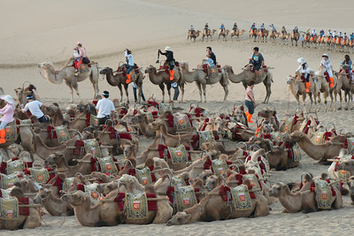 Camels with tourists at Mingsha Shan, Dunhuang, Jiuquan, Gansu Province, China