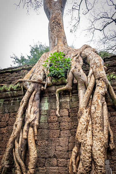 2019 Siem Reap Ankor Temples Cambodia-92653