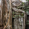 2019 Siem Reap Ankor Temples Cambodia-92574