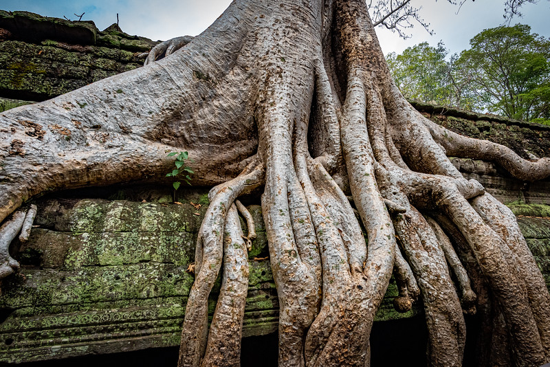 2019 Siem Reap Ankor Temples Cambodia-92632