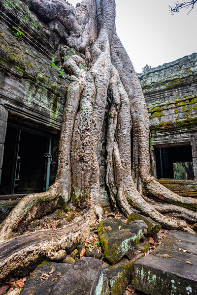 2019 Siem Reap Ankor Temples Cambodia-92540