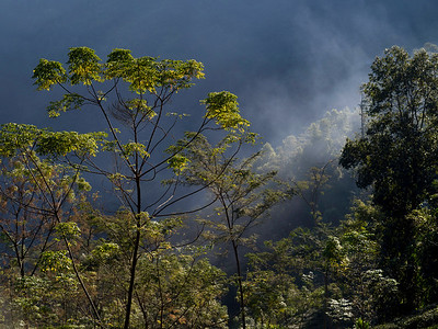 Scenic view of a forest, Darjeeling, West Bengal, India