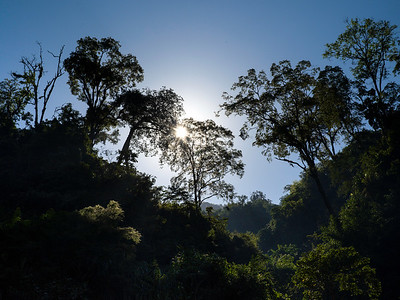 Scenic view of sunlight through trees in a forest, Darjeeling, West Bengal, India