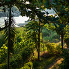 Trees and plants in forest at riverside, River Mekong, Laos