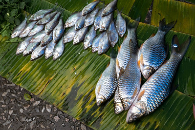 Elevated view of fish for sale, Luang Prabang, Laos