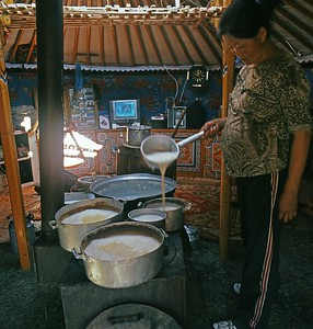 Making curd in ger. Western Mongolia