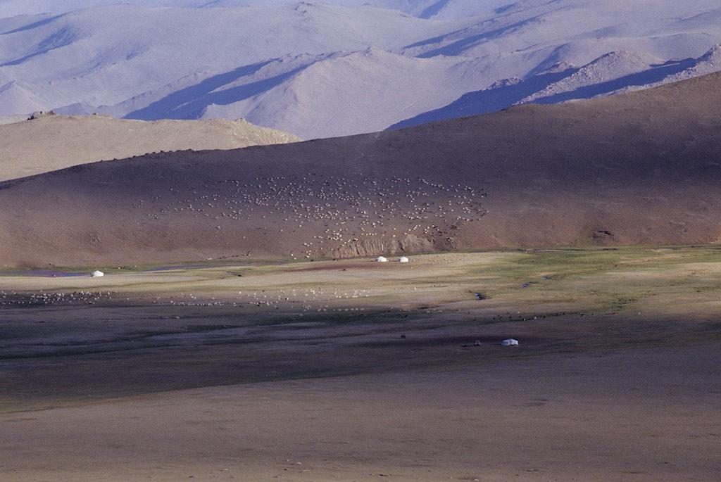 Landscape western mongolia. Sheep and goats grazing on hillside