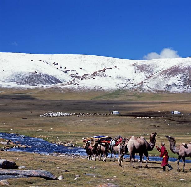 Camel caravan in western mongolia landscape
