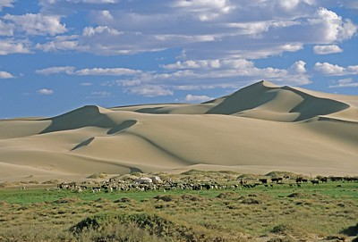 Sheep and ger by Gobi desert
