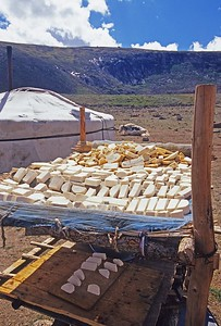 cheese made from yaks milk and sheep milk drying outside ger. western mongolia