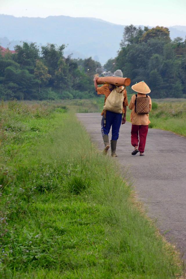 Farming around Kerinci
