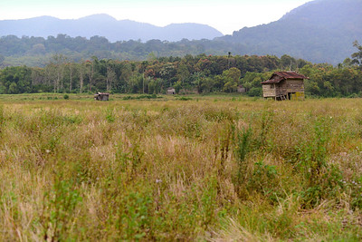 Farming around Kerinci