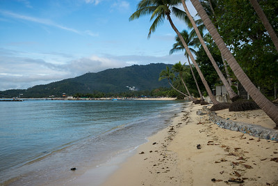 Palm trees on beach, Koh Samui, Surat Thani Province, Thailand
