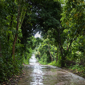 Wet road after rain passing through forest, Koh Samui, Surat Thani Province, Thailand
