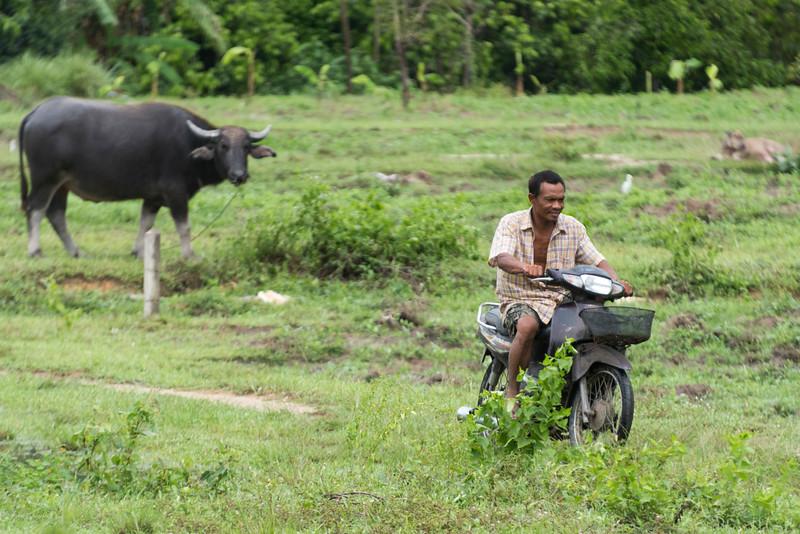 Man riding motorcycle in field, Koh Samui, Surat Thani Province, Thailand