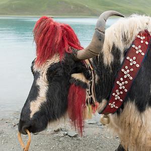 tibet12056.jpg