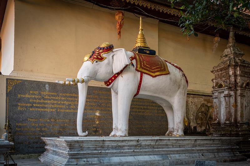 2019 Chiang Mai Thailand-97720