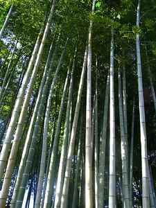 Japon, Kyoto, Hakusasonso